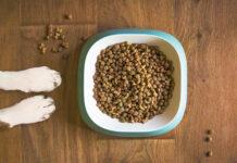 Schematy karmienia psów