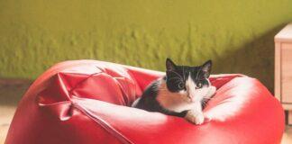 Karma dla starszego kota